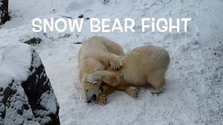 Super Fight Schnee Snow Eisbär Finja Polar Bear Ice Exhibit Tiergarten Schönbrunn World's Best Zoo
