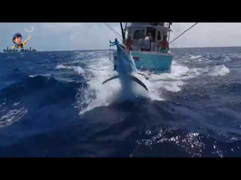 Top 5 Big Fish Caught in The Sea are Recorded By Cameras Amazing Fishing Skills, Catching Big Tuna