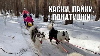 Валерия Шебухова о дрессировке хаски и катании на упряжке