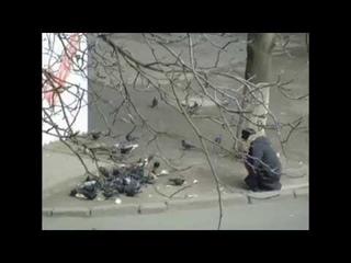 В Украине голодные люди отбирают хлеб у голубей