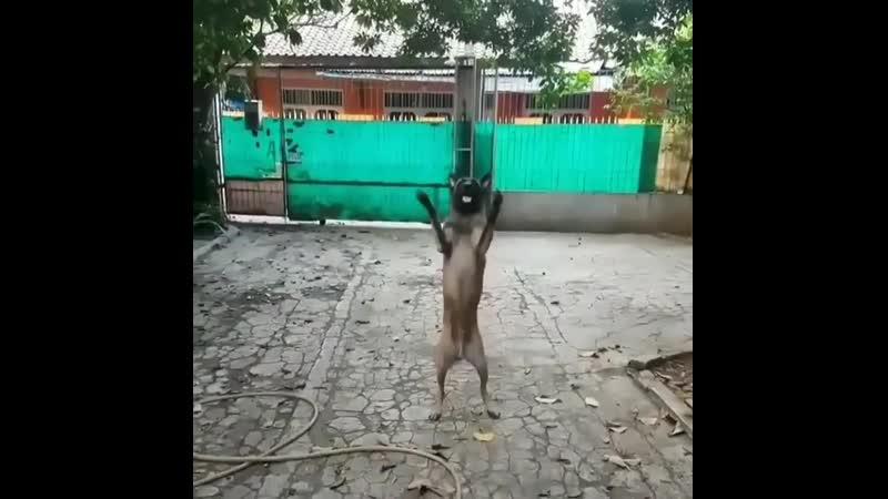 На самом деле это робопес робот пес дрессировка собака dog pet @ animalplanet @ animals video Подписывайтесь на нашу гр