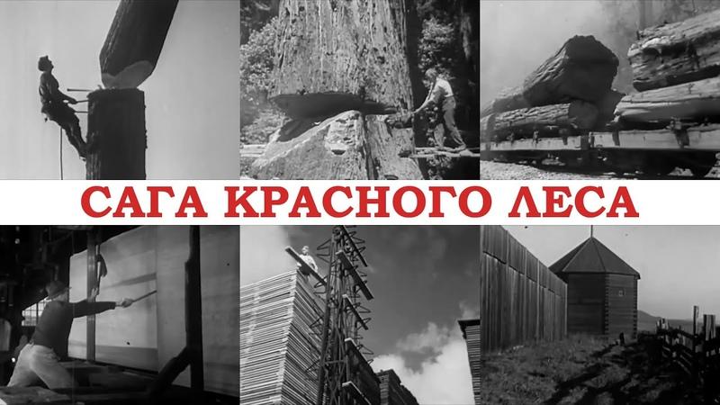 Валка секвой вручную и заготовка гигантского леса - Документальный фильм (США, 1946, дублированный)