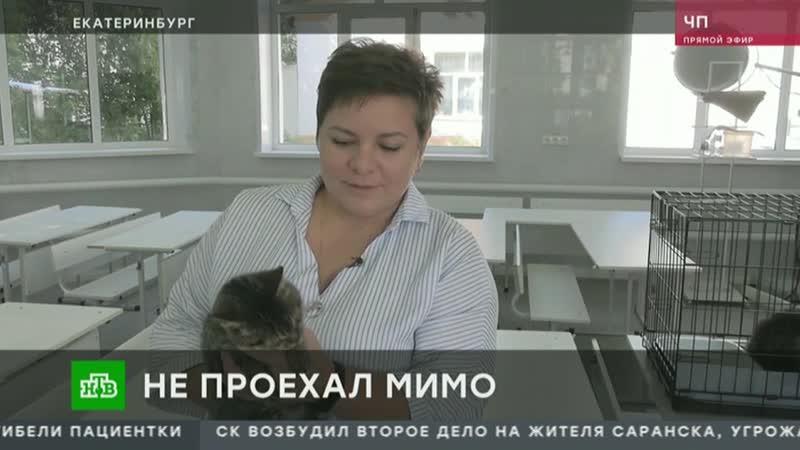 Саратовский дальнобойщик рассказал как уберег спасенного кота от усыпления