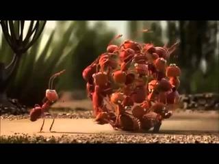 муравьи крабы пингвины смешной мультфильм