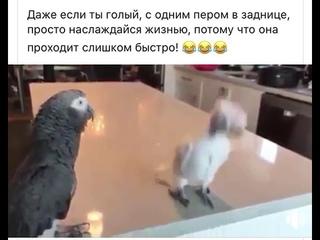 Милый попугай танцует под музыку, не смотря на все невзгоды)