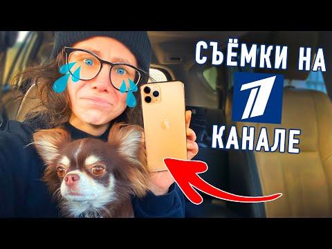 Я и моя собака на Первом Канале Юми укусила собака Украли Айфон Как все устроено на телевидении