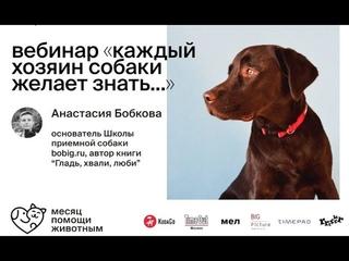 Бесплатный вебинар БО.big «Каждый хозяин собаки желает знать»