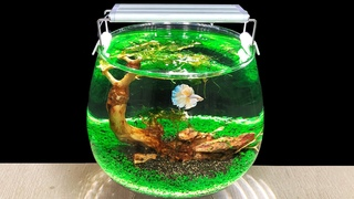 [Very Easy] How To Grow Aquascape Plants in Giant Wine Glass   DIY AQUARIUM OF BOTTLE   MR DECOR