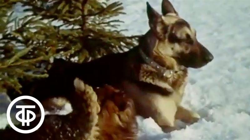 детское кино Жизнь и приключения четырех друзей История третья Игра с огнем 1981