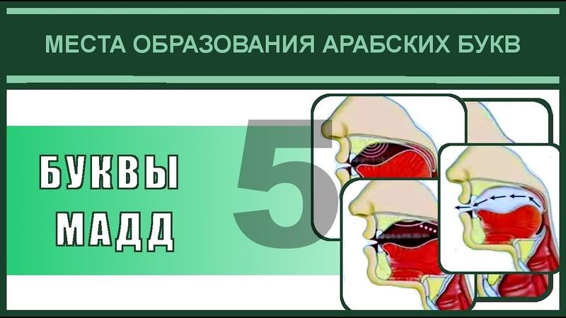 Айман Сувейд 5 Места образования БУКВЫ МАДД с субтитрами на русском