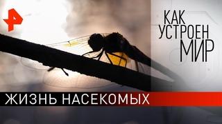 """Жизнь насекомых. """"Как устроен мир"""" с Тимофеем Баженовым ()."""