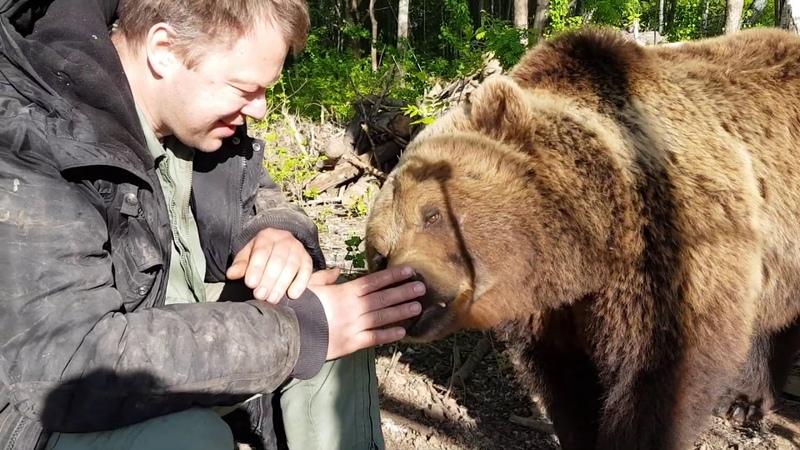 Медведь Мансур обнюхивает Андрея