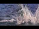 ПРИЁМ космопорт--супер-ХИТ певца ПРОРОКА САН БОЯ с морскими животными