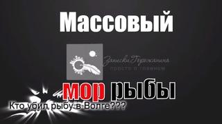 Кто убил рыбу в Волге? Массовый мор рыбы на Куйбышевском водохранилище