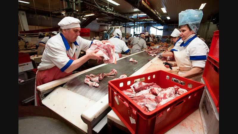 Работа в Польше на Мясоперерабатывающем Комбинате