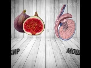 Оказывается, что пища, которая похожа на наши органы, укрепляет их здоровье!!!