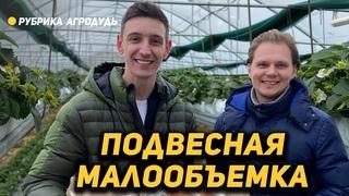 Подвесная малообъемка в Анапе и микрозелень по 1000 руб/кг - Сады Бужора
