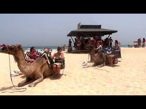 The Camel Trip 2020 ponyboy