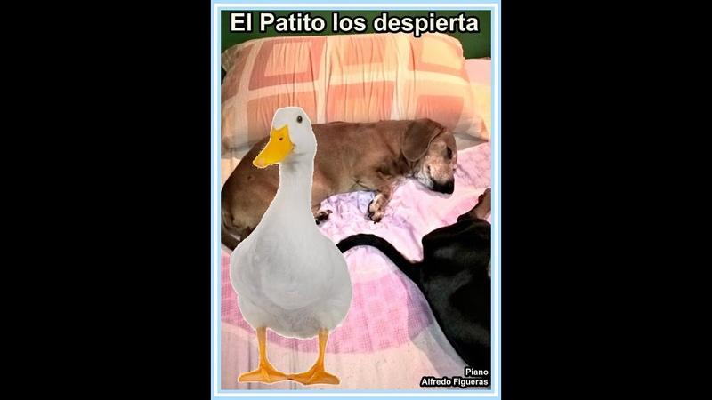 El Patito los despierta Piano Alfredo Figueras Partituras Gratis Argentina