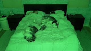 Каково это - спать с двумя уютными лайками))