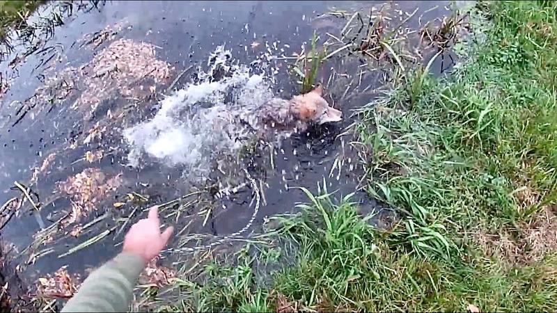 Впервые на прогулке с ЯКУТСКИМ ВОЛЧОНКОМ Купание в ручье таежного волка Парк северных волков СПБ
