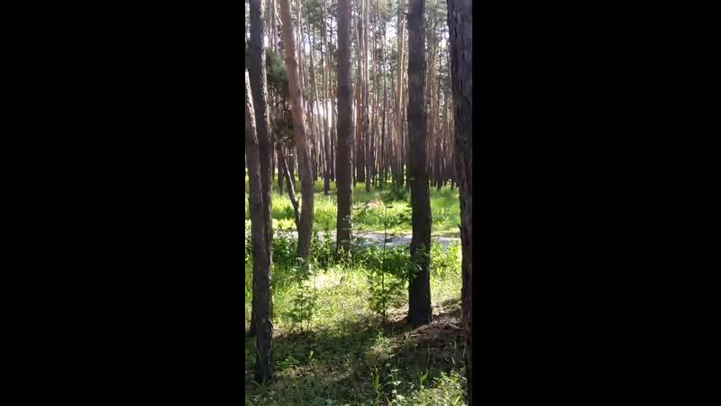 30 06 2020 Пение птиц в Маслова Пристань