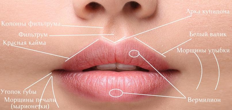 Губы и область вокруг рта., изображение №3
