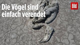 Drohnen-Video aus der Türkei: Tausende Flamingos sind gestorben