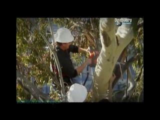 Discovery Труднейшие работы мира Управление лавинами дальнобойщик и пильщик деревьев Документальный 2007
