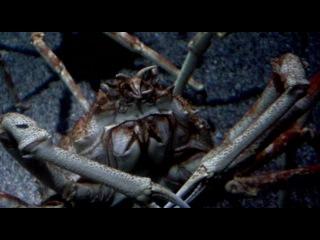Океанариум - крабы-пауки
