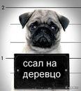 Vip-Deemon Andreev