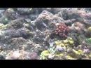 SONY XPERIA Acro S LT26w拍攝浮潛影片