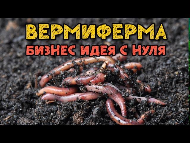Запуск Вермифермы Начинаем разводить калифорнийских червей