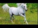 романс Белый конь в исп Александра Малинина.Видео Натальи Егоровой