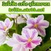 Заведи себе цветочек (фиалки и др. цветущие )