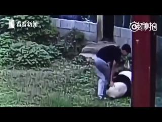 Китайский парень решил погладить панду, пришлось бороться