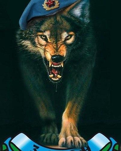 махровые картинка вдв волк залит
