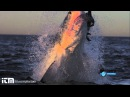 Slow Motion Shark Attack High Definition - Shark Week