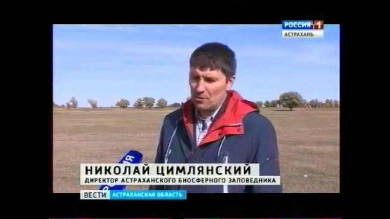 Сегодня в Астраханский биосферный заповедник привезли стерхов