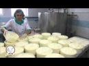 Молочные овцы (lacon, лакон, lacaune), производство овечьего сыра