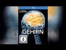 Испытайте свой мозг (2011)   Test Your Brain