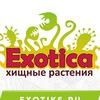 EXOTICA | Хищные Растения