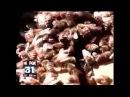 ChemTrails HAARP in den NEWS im TV UPDATE v4 Die PHAR(m)Aonen kündigen im TV ALLES an!