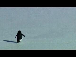 Настроение: одинокий пингвин в ледяной пустыне