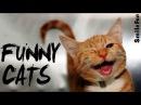 Смешные Коты ДО СЛЕЗ Приколы с Котами Кошками 2017