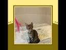 Котёнок в ответственные руки в дар. По вопросам в ЛС