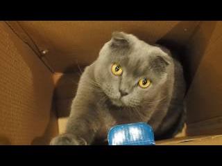 The most dangerous animal - cat Опасный котик кот