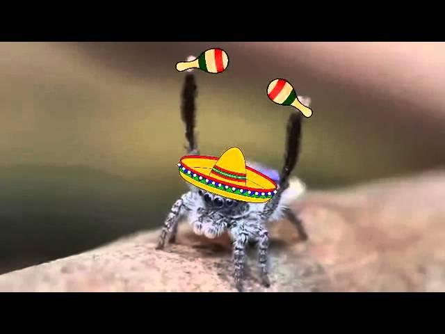Паучок танцует сальсу