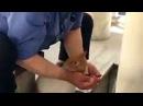 Abdest Alırken Yanına Gelen Kediye Şu verdi Dailymotion Video
