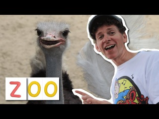 At The Zoo With Matt | Zoo Song For Children, Wild Animals | Learn English Kids